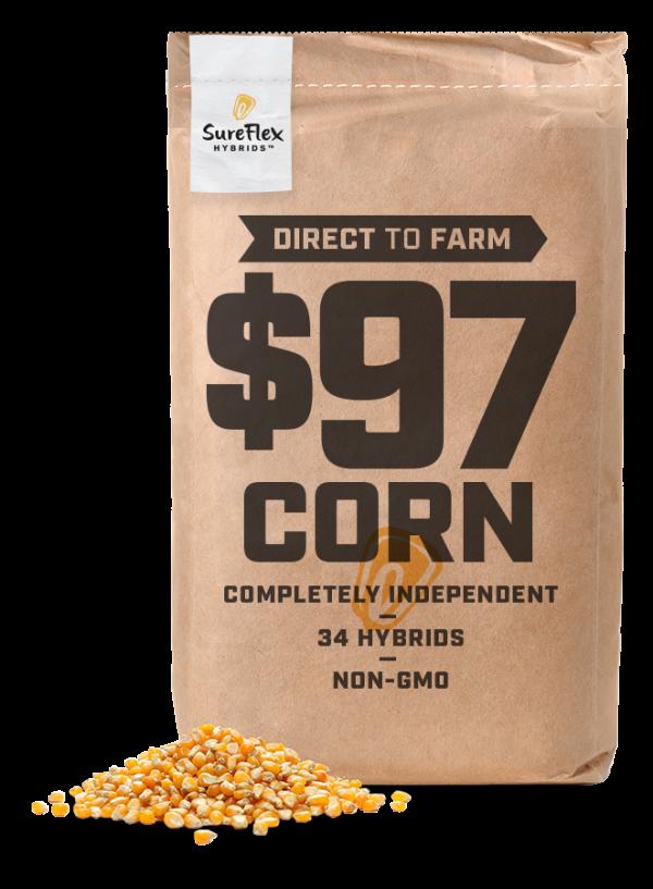 Hybrid Seed Corn